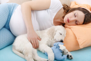 Pregnant woman sleeping with golden retriever puppy at home